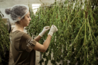 Due Diligence for Suppliers & Cannabis Supply ChainPartners